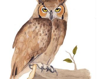 Owl Illustration - Archival Print 8x11