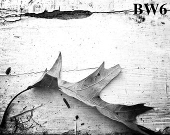 Leaf Series- Black and White Photographs