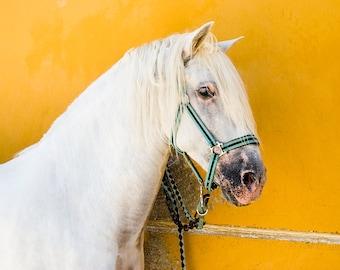 "Horse Prints,""The White Horse"", Spanish Horse Print, White Stallion, Equine Prints, Large prints"