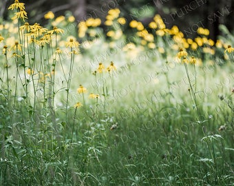 Yellow Flowers Grassy Field Digital Background - Digital Photography Backdrop - Composite Background - digital download