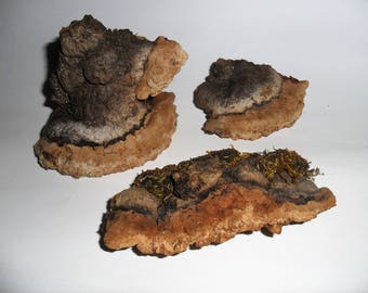 Set of Three Fungus- Dried Tree Fungus- Florist Decor- Miniature Fairygarden Decor-  For Craft Projects- Botanical