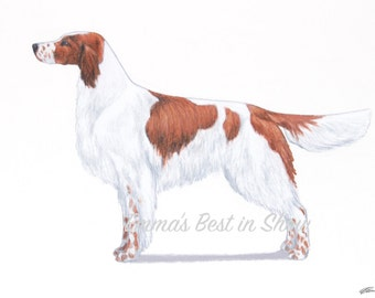 Irish Red and White Setter Dog - Archival Fine Art Print - AKC Best in Show Champion - Breed Standard - Sporting Group - Original Art Print