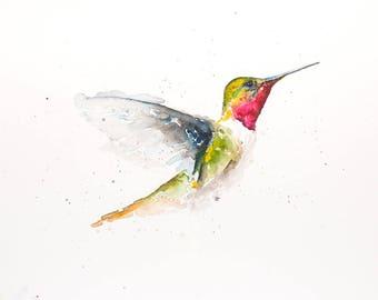 14x11 Humming Bird, Original Water Color, Water Colour Print.  Wall Art, Bird Art, Art Print