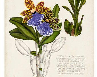 Orchid Field Notes II
