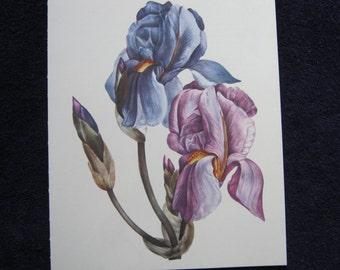 Vintage Garden Flower Bearded Iris print purple blue 1970s