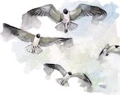 Bird Watercolor Painting ...