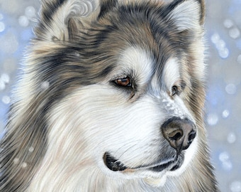 5 x Malamute Dog in Snow Christmas Greetings Cards