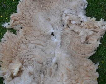 Raw Sheep Fleece White Shetland