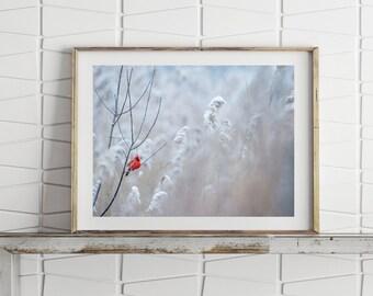 Cardinal Print Bird Prints Nature Art Large Wall Art Prints Digital Download Bird Photography Printable Wall Art Cardinal Wall Art