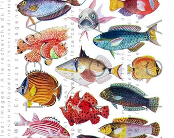 18 FAB Exotic TROPICAL FISHES. Fishes Digital Collage Sheet. Vintage Fish Illustration. Digital Fish Download.