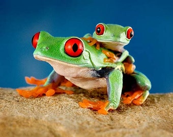 Children's Wall Art - Frog & Baby - Colorful LIVE Frogs - Frog Art