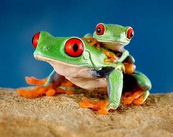 Frog Wall Art - Frog & Baby - Children's Room Art - Real Frogs