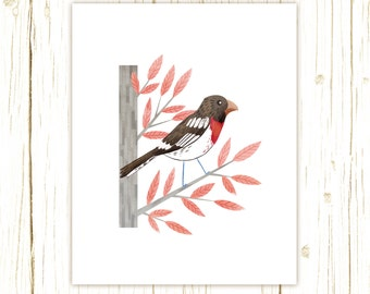 Rose Breasted Grosbeak Print -- bird art -- bird art 52 birds stephanie fizer coleman illustration