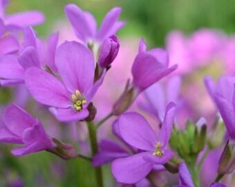Lovely Purple Flowers Image, Purple Flowers Canvas Print, Purple Flowers Photograph #238