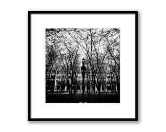 New York City Forest, NY Forest in the City Print, NYC Photography, New York Architecture, Wall decor NYC art