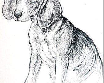 K.F. Barker - 1938 -BEAGLE PUPPY Soleful Eyes -  Professionally Matted Dog Puppy Print Ready to Frame