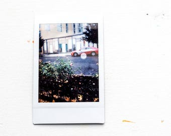 Fuji Instax Photograph of Roses Next to a Road