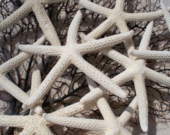 "White Starfish Pencil 1 Dozen 4""-5"" Great for weddings or party"