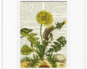 Dandelion dictionary page print