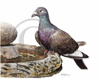 BIRD PAINTINGS - Watercolor PIGEON Print, gift for birder, watercolor bird painting