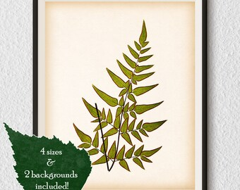 Antique fern print, Fern illustration, Vintage botanical print, Home wall art, Wall art print, Art print, Instant download printable art #77