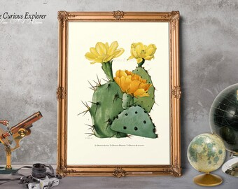 Cacti Art Prints, Botany Kitchen Decor, Biology Art Posters, Desert Art Decor, Gift for Dad Print, Nature Art Print - E8g24