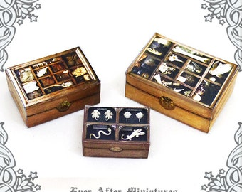 3 Cabinet of Curiosities Dollhouse Miniature Display Boxes Set – 1:12 Antique Dollhouse Miniature Bone Relic Witch Case Printable DOWNLOAD