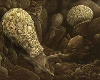 Difflugia in Soil