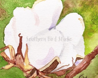 Cotton Boll, Mississippi art, Oxford MS, Ole Miss, watercolor art, art prints, cotton bolls, cotton, cotton paintings, MS paintings