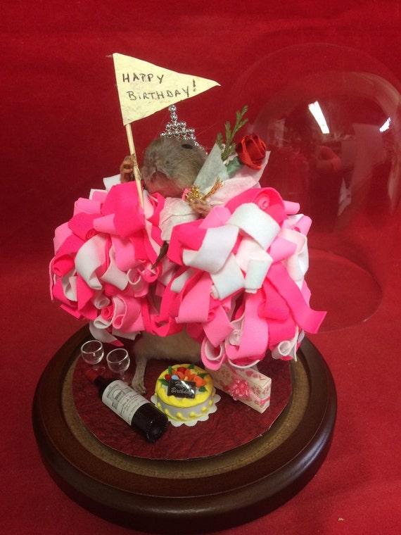 Taxidermy Rat Happy Birthday Cheerleadercakewinepresent