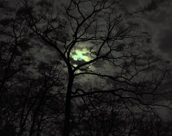 Full Moon / Forest Night / Trees / Winter Night / Fine Art Photography