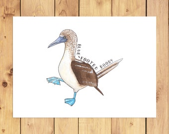 Blue-Footed Booby A4 Print