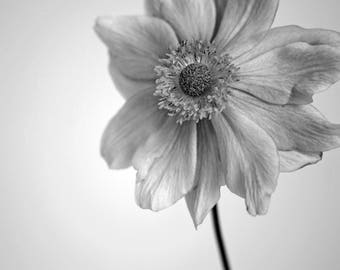 Flower Photography Black and White, Flower Photo, Botanical Fine Art Print, Floral Photography, Flower Close Up, B&W