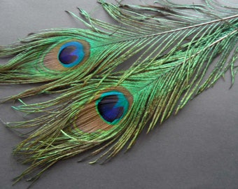 peacock feathers, 2 eyes superb quality
