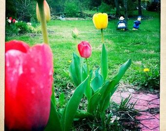 5x5 Tulips Print