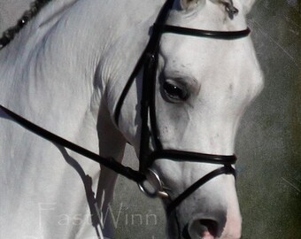 Set of 3 prints horse wall art Dressage show horse grey gray white Arabian horse lover horse gift horses equine fine art prints horse art