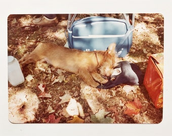 Original Vintage Color Photograph | Autumn Picnic Puppy Nap