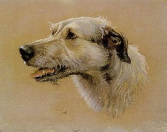 Irish wolfhound portrait 8 x 10 vintage image reproduction print heavy card stock