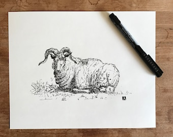 KillerBeeMoto: Original Pen & Ink Sketch of Ram Laying Down (Prints Are Also Available)
