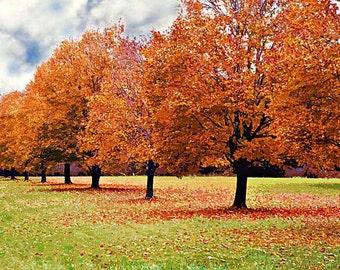 Nature Photography, Fall Foliage Print, Fall Tree Print, Fall Print, Autumn Print, Leaf Print, Leaves Photo, Tree Picture, Fall Tree Picture
