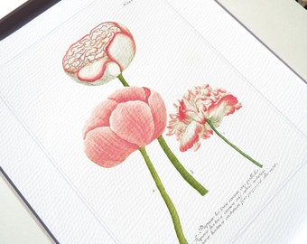 Botanical Tulip Study 2 in Pinks, Corals & Green Archival Quality Print