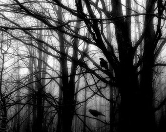 """Crow Print  9"""" X 12"""". Two Crows, Dark Mysterious Forest, Crow Art, Mysterious Crows, Crow Decor, Surreal, Victory for Two"""