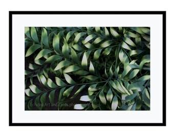 Large Botanical Print, Modern Green Wall Art, Leaf Wall Art Print, Fine Art Nature Photography, Living Room Decor