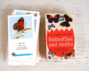 50+ Butterfy & Moth Flashcards   Edu-Cards of Nature    1960s Illustrated Butterfly Flash Cards   Insect Flashcards