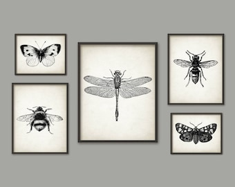 Insect Wall Art Poster Set Of 5 - Entomology Art Prints - Bumblebee Dragonfly Butterfly Beetle Wasp Moth Home Decor - Entomology Art AB745