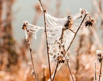 Winter Frost Home Decor Photo Print