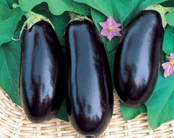 Black Beauty Eggplant Garden Seeds Non-GMO 30+ Seeds Naturally Grown Open Pollinated Heirloom Gardening