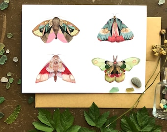 Collector: Moths Part II  // Blank Art Card // Woodland Illustration
