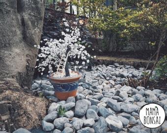 Cherry blossom, hand made beading tree