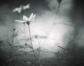 """black and white photography, flowers and rain, spring, monochromatic wall art - 20x24, 16x20, 11x14 or 8x10 photograph, """"Thirsty"""""""